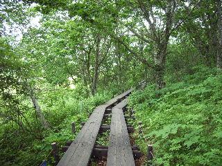 林の中の木道