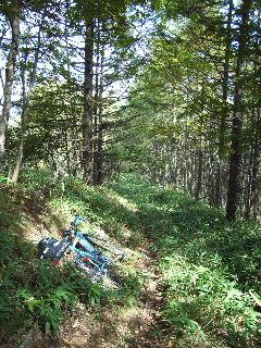 笹に覆われた登山道